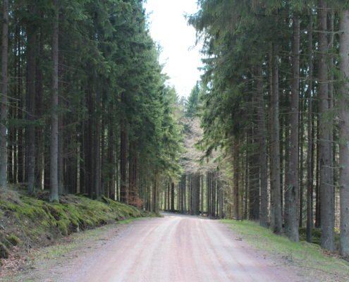 Ekoparken, fotograf Päivi Slotteborn