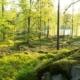 Breanäs bokskog